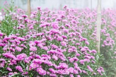Đồi cừu - Thiền viện Chân Nguyên - Dinh Cô - Vườn Trái cây - Vườn Hoa Sao Nhái Hồng