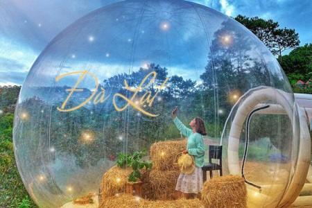 Đà Lạt: Đồi Chè - Vườn Hoa Cẩm Tú Cầu - Vườn Hồng Nhà Tom - Hiệp Khách Lầu - DaLaLand - Linh Ẩn Tự